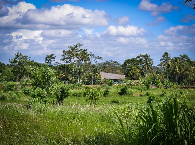 Дорога из Убуда до шоколадной фабрики