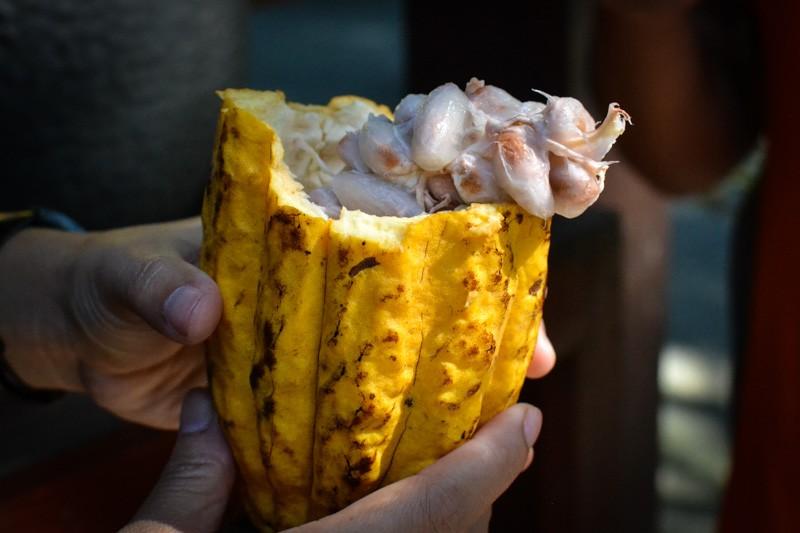 Натуральные какао-бобы
