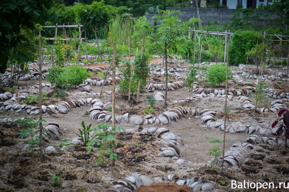 Moksa Plant Based Cuisine & Permaculture Garden