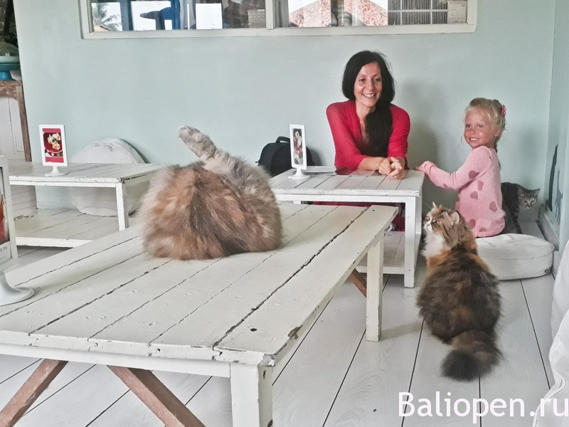 Кошачье кафе в Убуде (Cats Cafe Ubud)