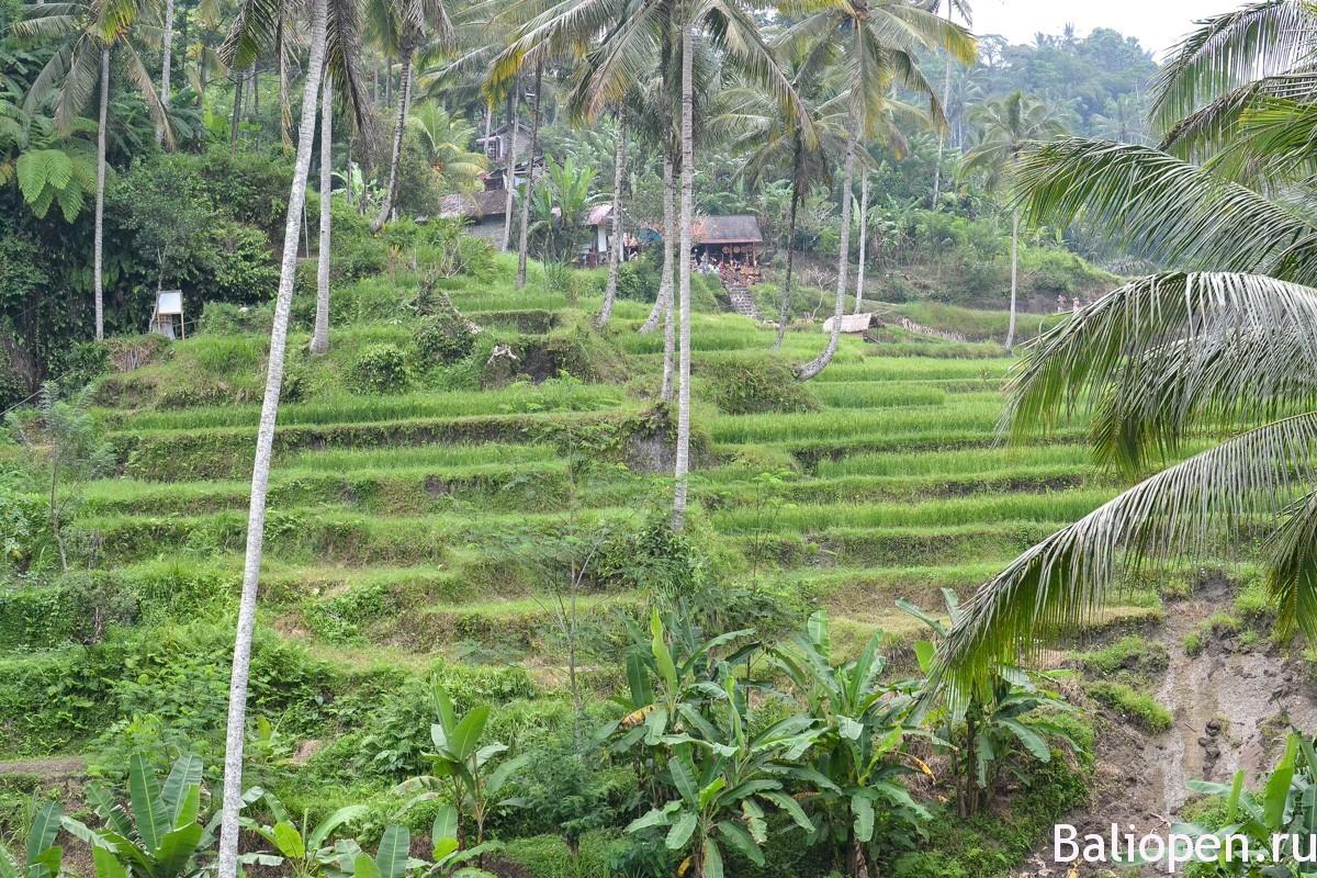Гунунг Кави (Gunung Kawi)