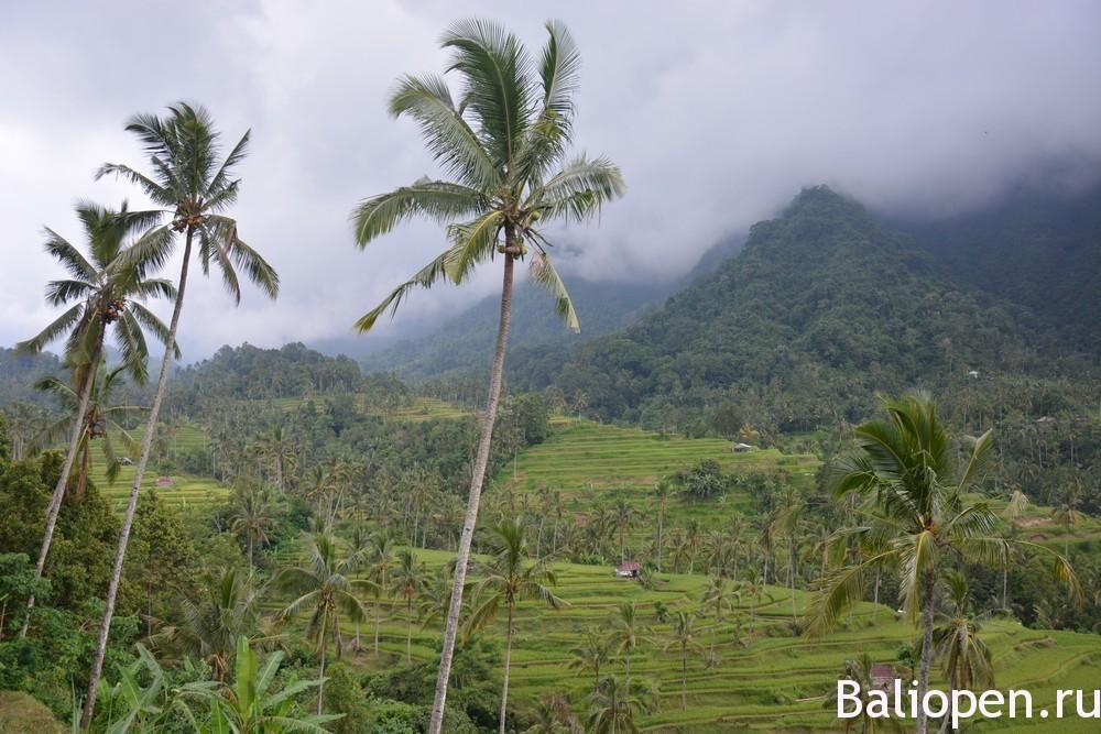 Север Бали фото