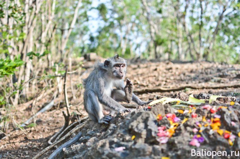 Путь на гору обезьян