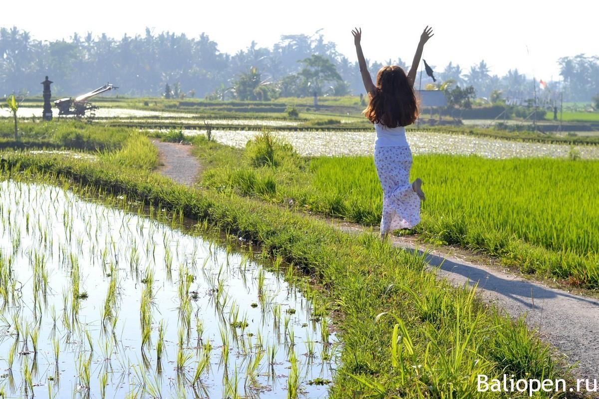 Какая живность живет в рисовых полях острова Бали?