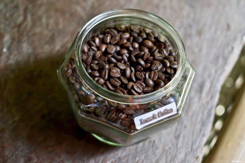 Кофе лювак на плантации