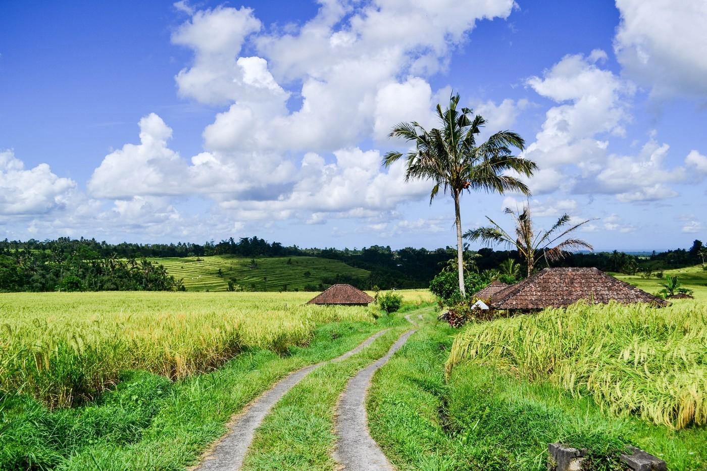 Самые красивые рисовые террасы острова Бали - Jаtiluwih.