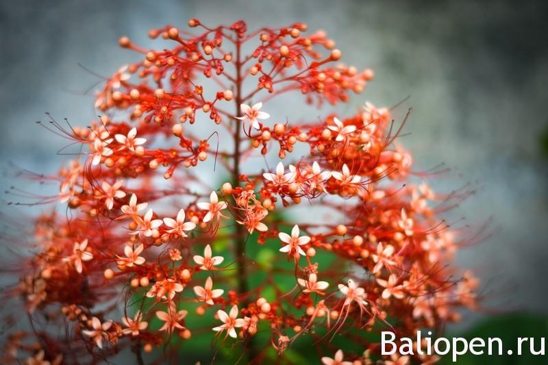 Какие насекомые могут жить в доме на Бали?