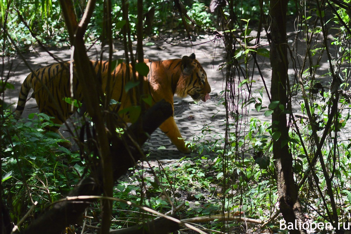 Бали Сафари Парк наш обзор и отзывы.