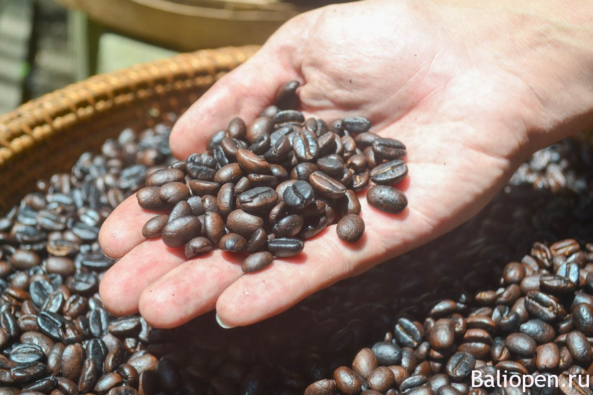Кофе лювак - самый дорогой кофе в Мире!