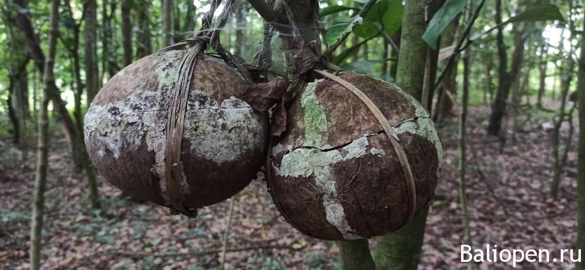 Где находится кладбище плацент на Бали (Setra Ari-Ari)
